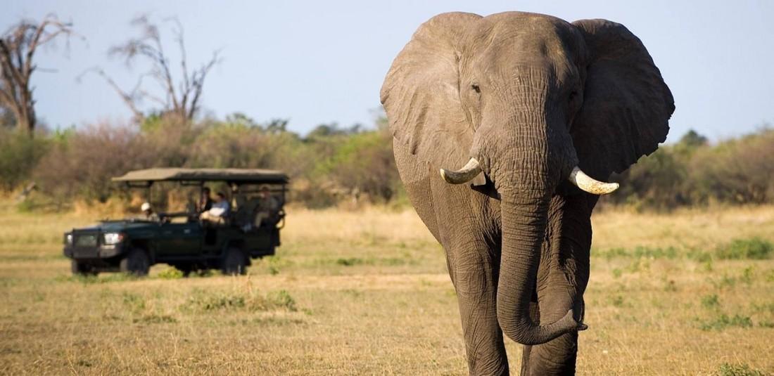 Сафари в Африка - индивидуални пакети на супер цени
