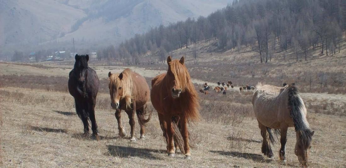 Байкал и Монголия 6