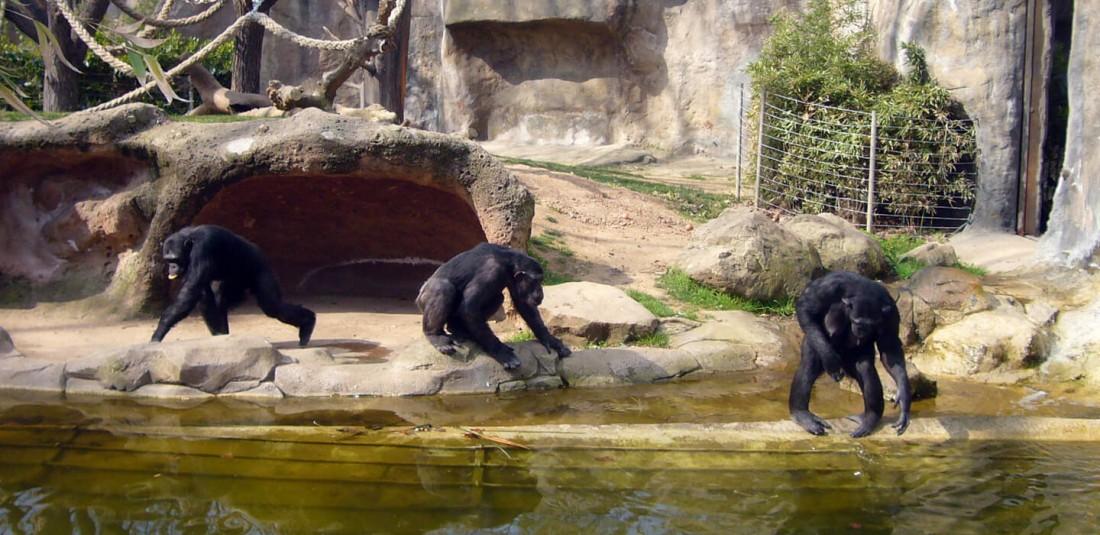 Зоогическата градина в Барселона