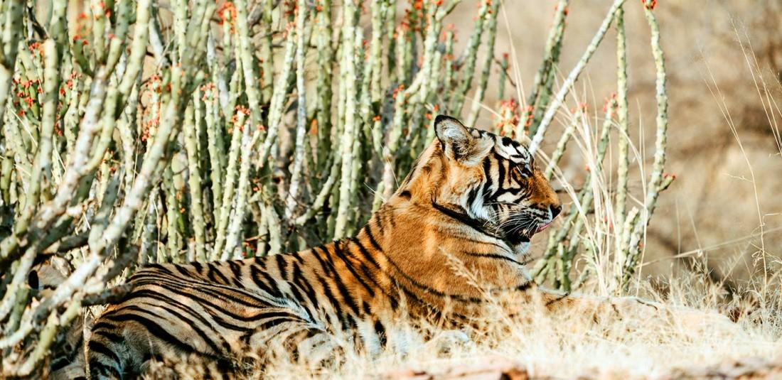 Индия - Златният триъгълник и сафари в джунглата