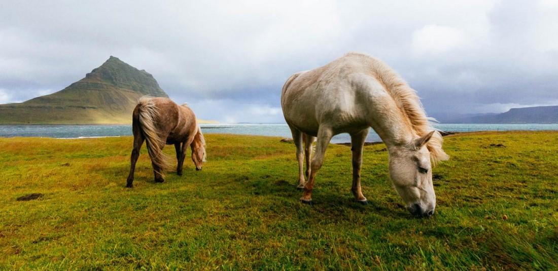 Исландия - страната на елфите и троловете 4