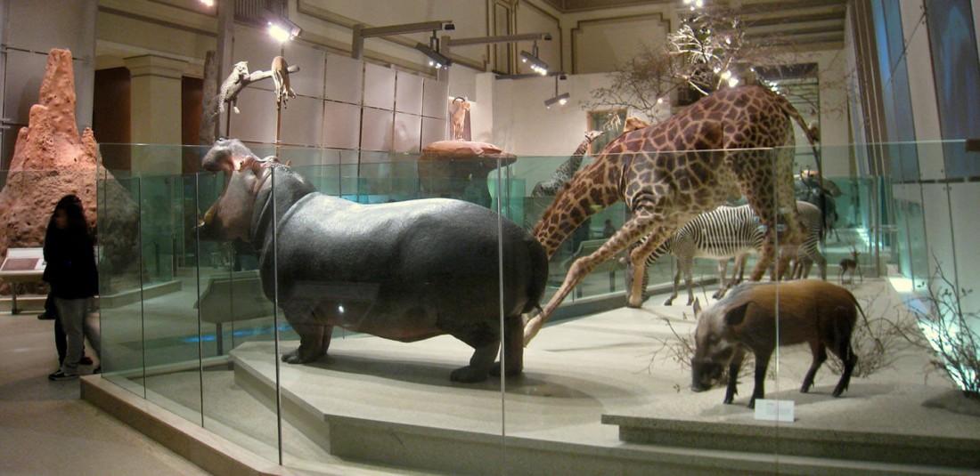 Националният природонаучен музей на Смитсоновият институт