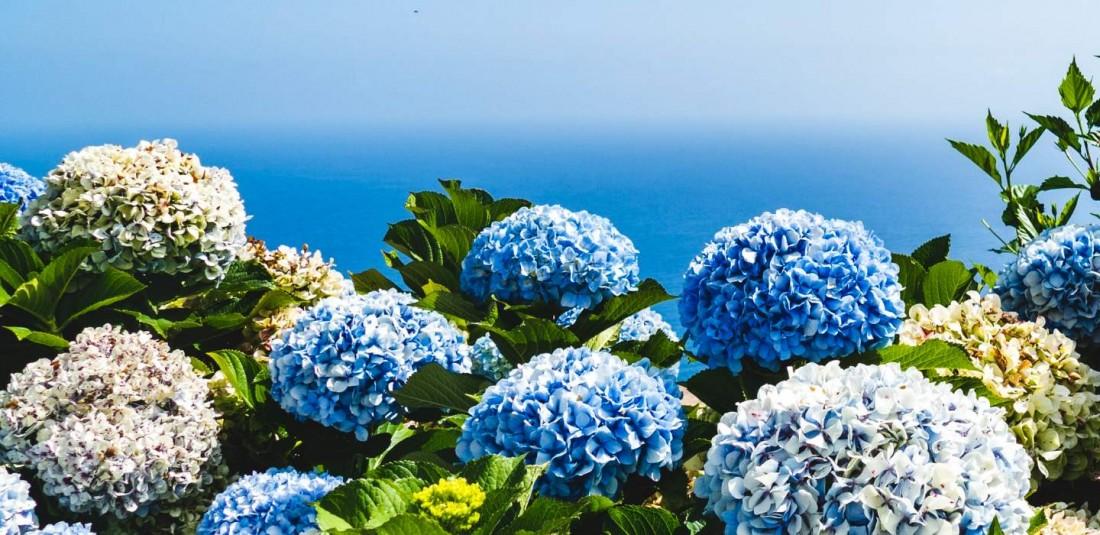 Остров Мадейра - чартър 6