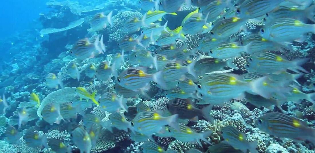 Почивка на Малдивите - Royal Island Resort and Spa**** 5