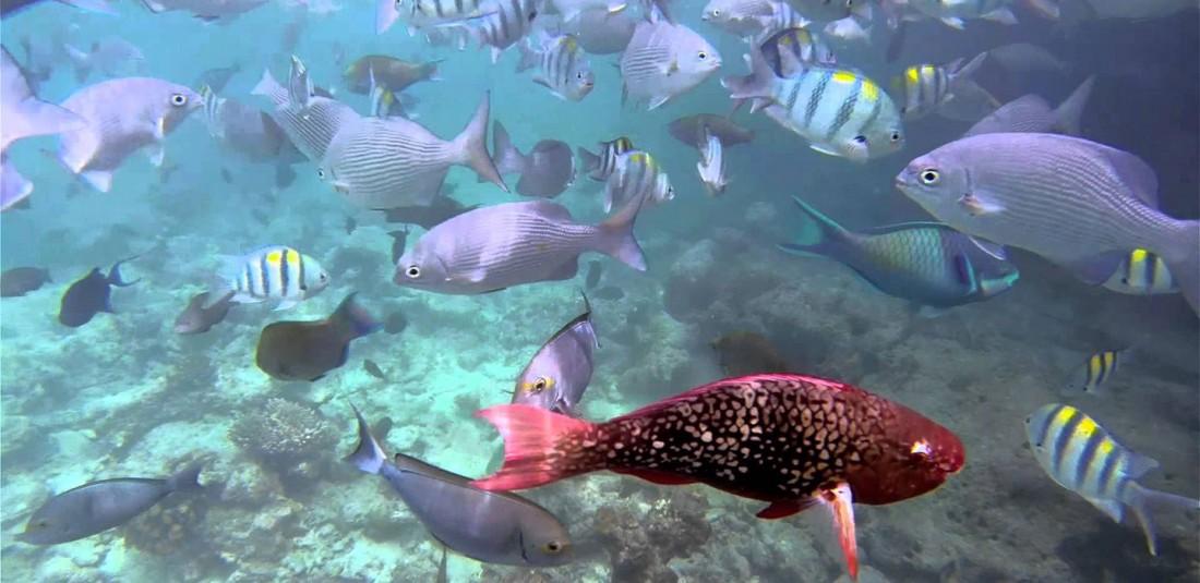 Почивка на Малдивите - Sun Island Resort & Spa****