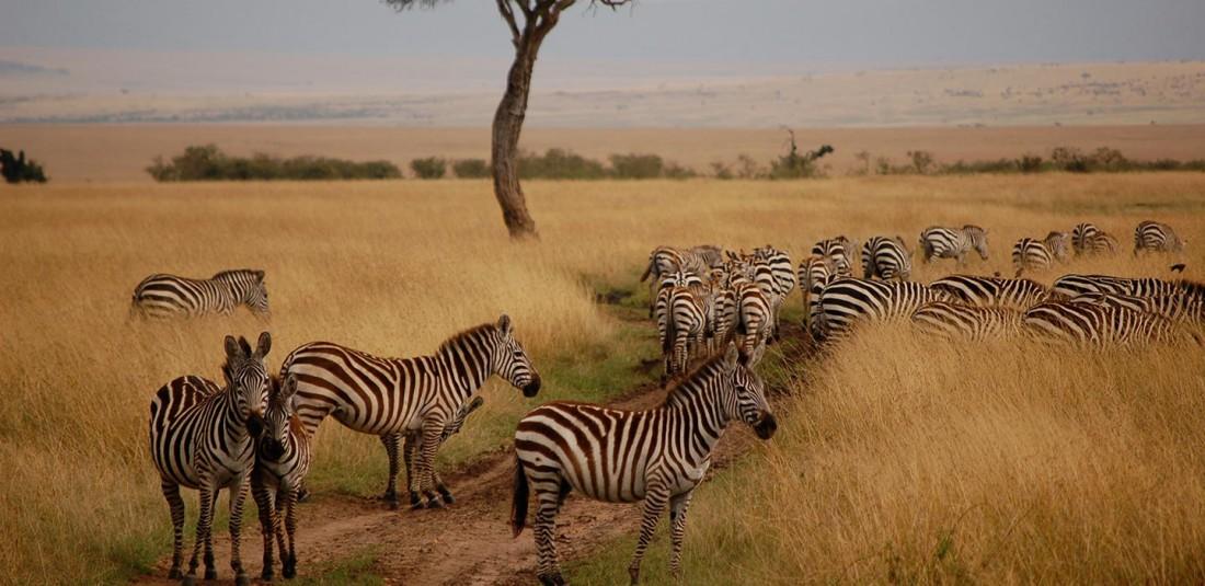 Сафари в Кения - 2020