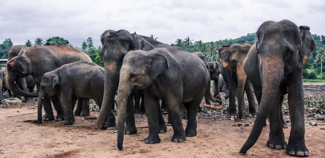 Шри Ланка 4
