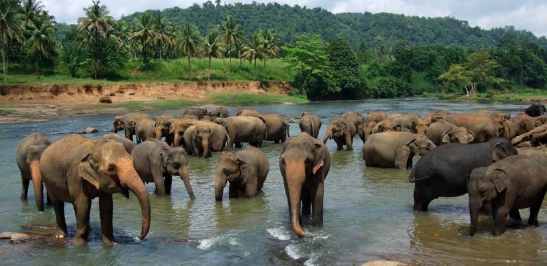 Шри Ланка - ноември