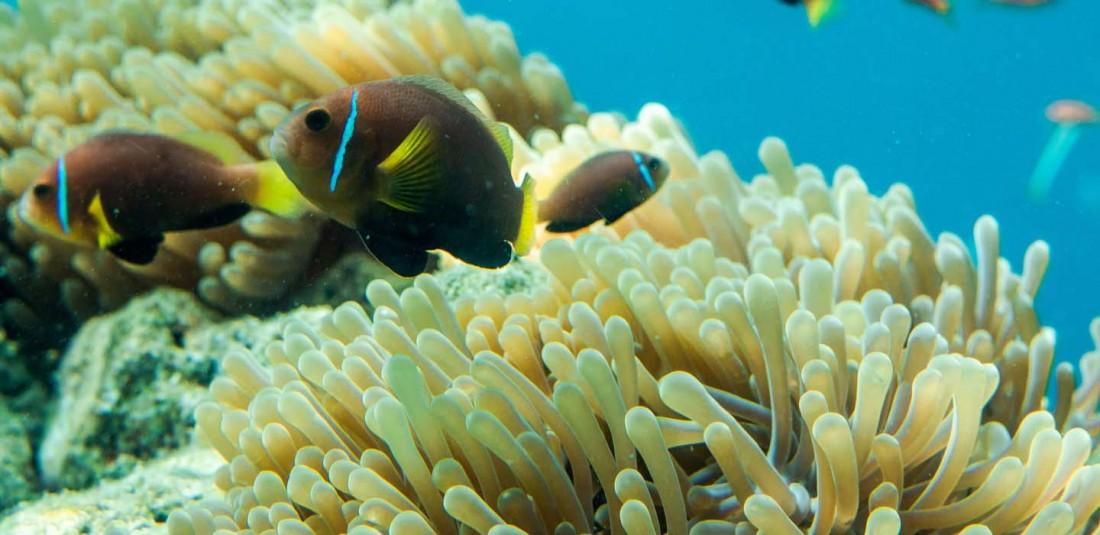 На Малдивите през ноември - специална оферта 8