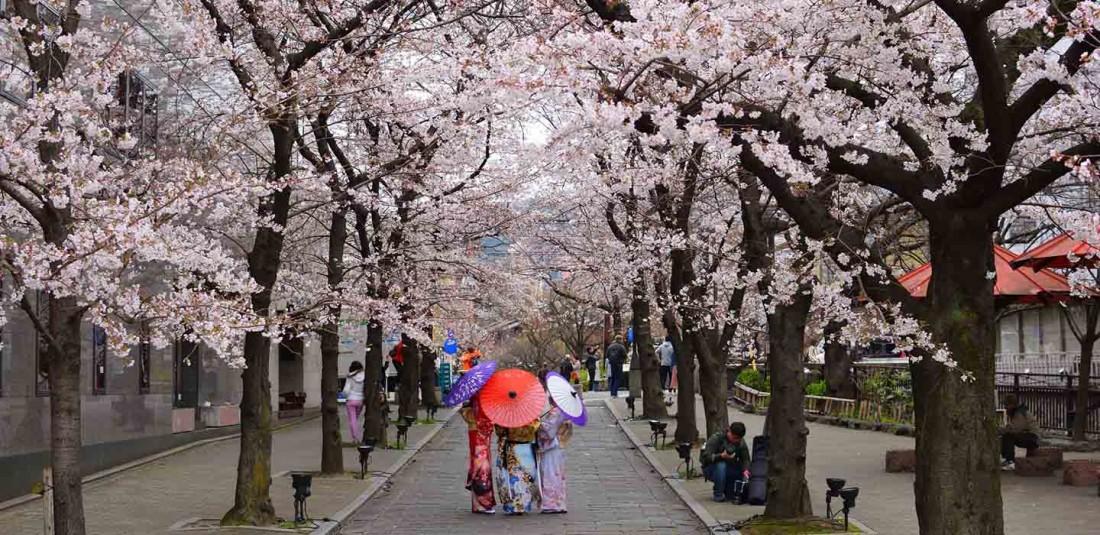 Величието на Япония по време на цъфтежа на вишните