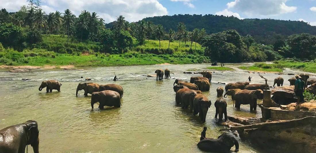 Круиз - Индия, Малдиви и Шри Ланка